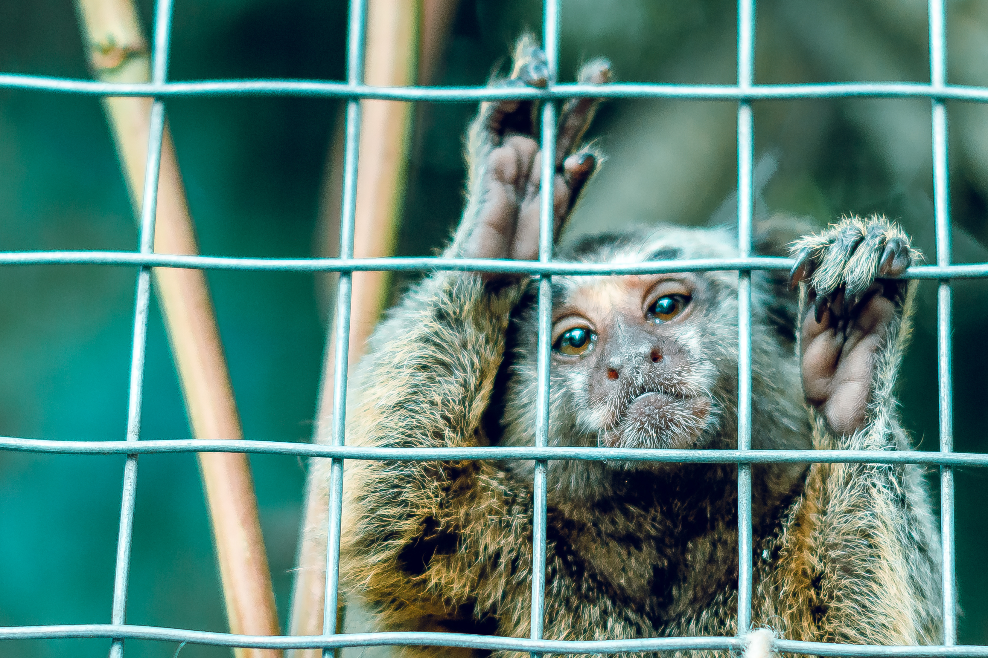 A monkey behind bars in a cage.